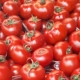 fair tomato